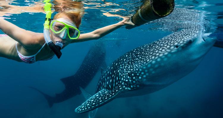 ロス・カボスでジンベイザメと泳ぐ