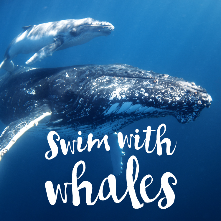 ザトウクジラと泳ぐ