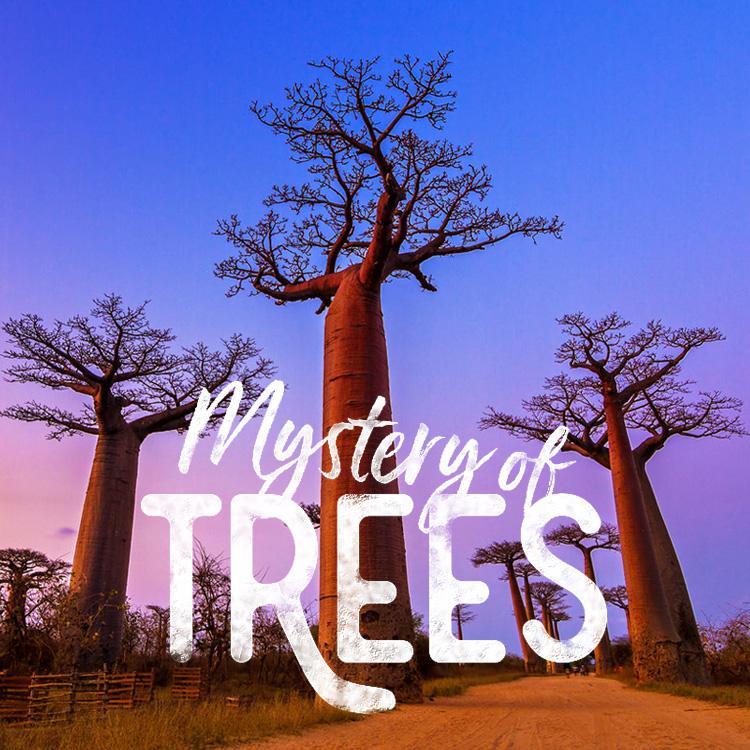 神秘を生きる巨木に出会う
