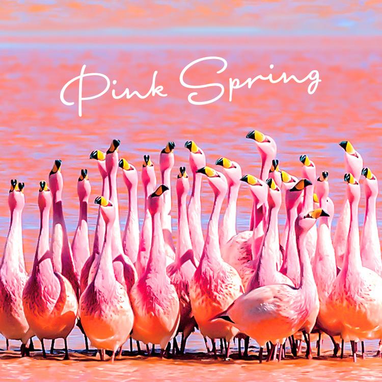 """ピンクの湖!?世界のかわいい""""ピンク""""スポット"""