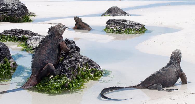 恐竜が暮らす島