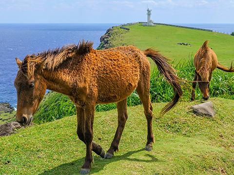 查看来自与那国岛的旅游活动。