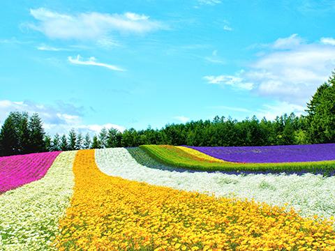 北海道 富良野・美瑛・旭川 出発の観光・オプショナルツアーはこちらから。