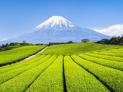 静岡 磐田・袋井・掛川 出発の観光・オプショナルツアーはこちらから。
