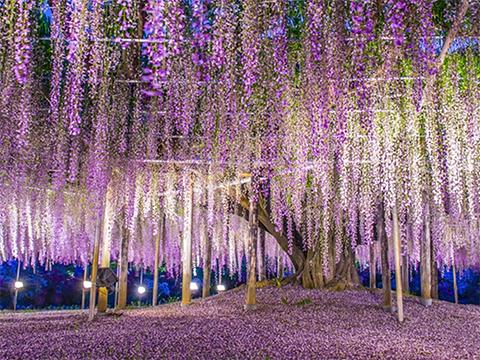 栃木 佐野・小山・足利・鹿沼 出発の観光・オプショナルツアーはこちらから。