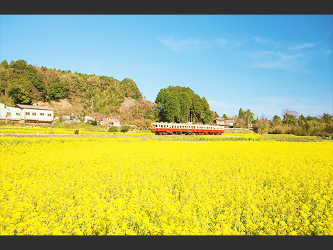 千葉 茂原・市原 出発の観光・オプショナルツアーはこちらから。