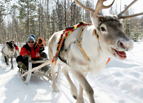 Check out tours and activites from Saariselka, Finland.