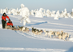 Check out tours and activites from Levi, Finland.
