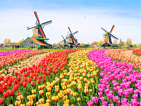 Tours and activites from Netherlands, Europe.