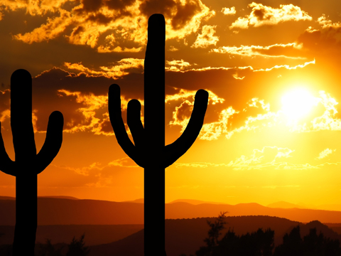 Check out tours and activites from Phoenix/Scottsdale, USA.