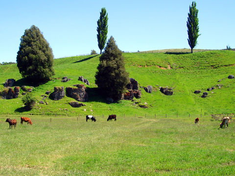 Check out tours and activites from Waitomo, New Zealand.