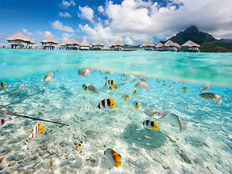 Check out tours and activites from French Polynesia, Oceania.